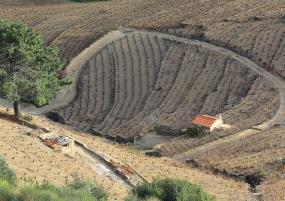 Vignes dans les hauteurs de Collioure