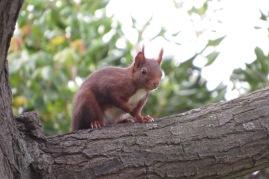 Écureuil venant nous rendre visite dans notre jardin