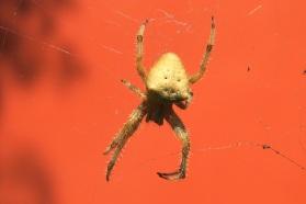 Araignée sur un mur coloré