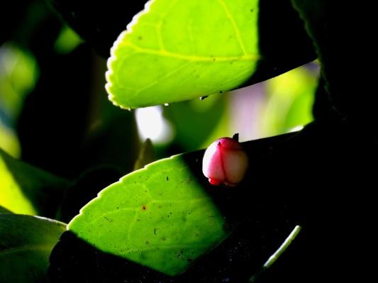 Fleur dans un jeu de lumière et d'ombre