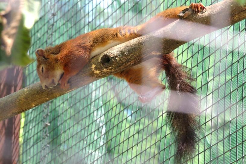 Sieste écureuil