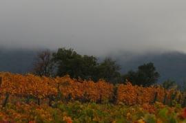 Vignes et brumes côte vermeille